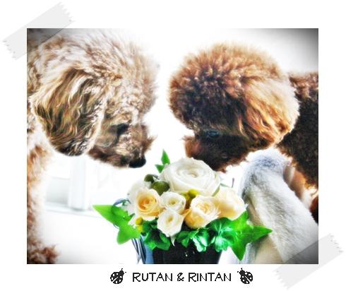 rutan and rintan 0309