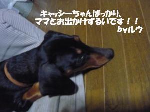 P1000835.jpg