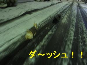 ダ~ッシュ!!