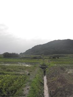 タイモ水田2