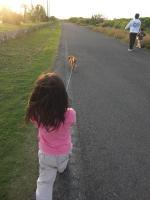犬の散歩1