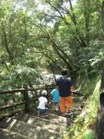 奄美大島観光5