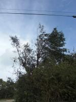台風18号6