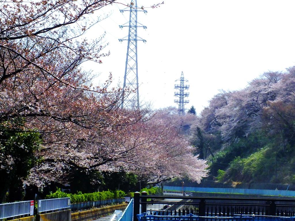 DSCF9405-sakura.jpg