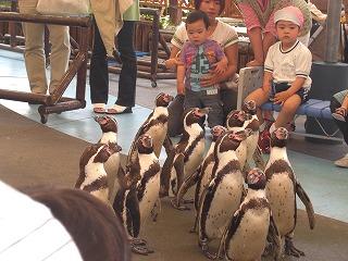 ペンギンの行進!