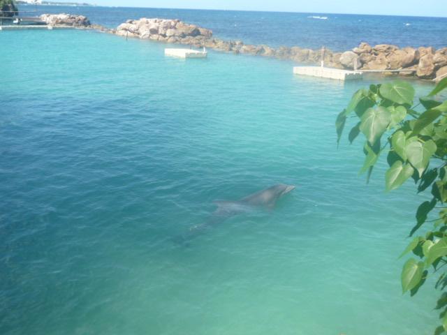 DolphinCove(イルカコーナー) (2)