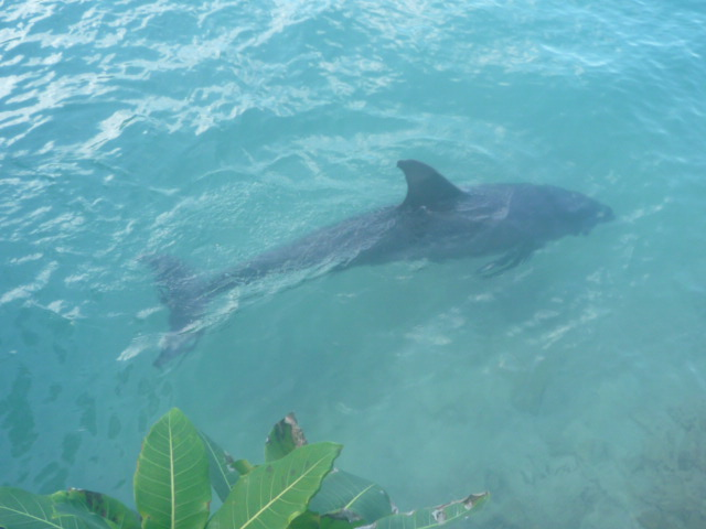 DolphinCove(イルカコーナー) (7)