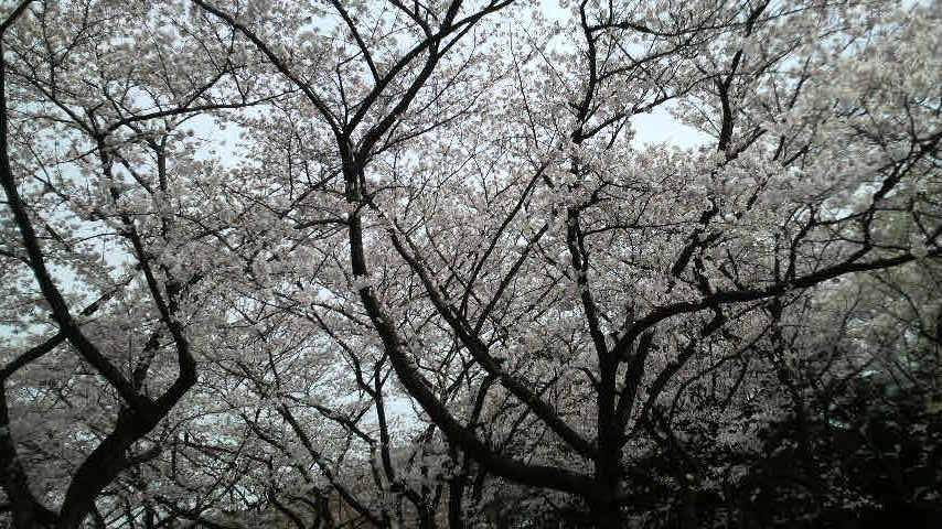 090404_代々木公園