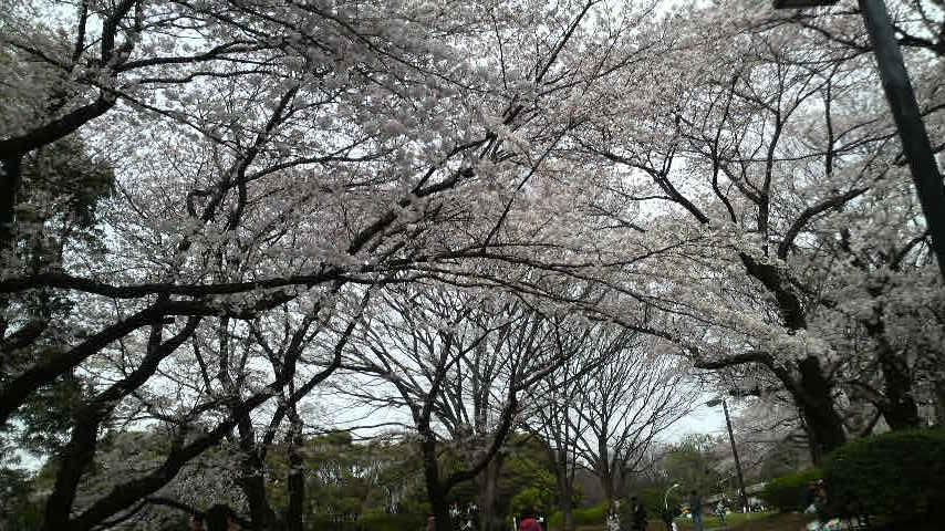 090404_代々木公園2