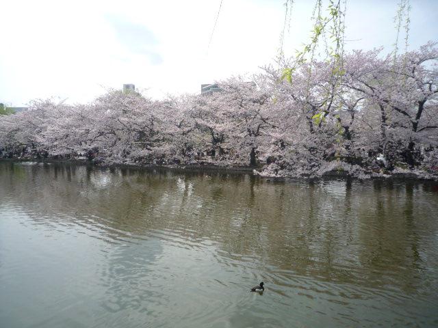 090405_上野公園