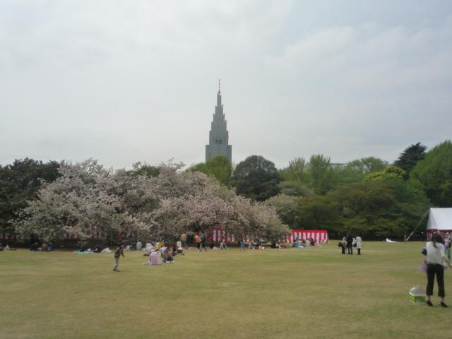 090418_お花見(新宿御苑3)