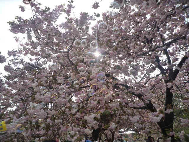 090418_お花見(新宿御苑桜とシャボン玉1)