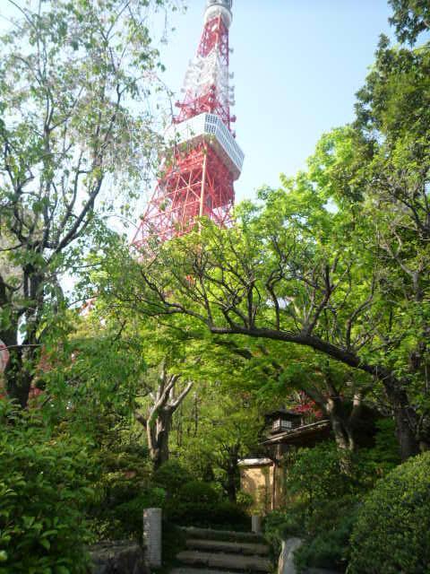 090419_芝公園(うかいのお庭からのタワー)