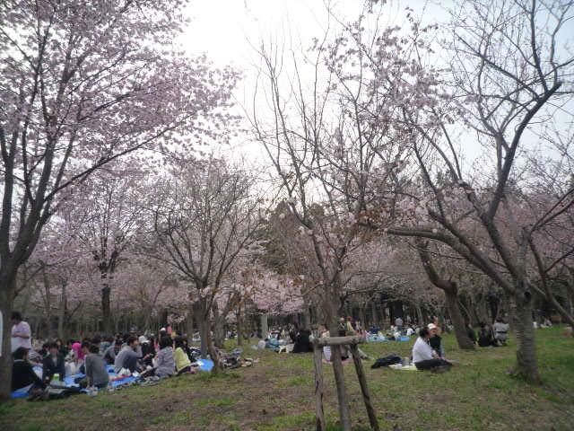 円山公園(お花見の様子)2