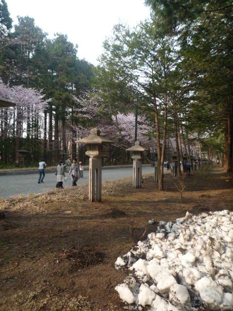 円山公園(参道の雪)