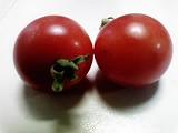 100616_つばさトマト