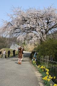 1248堀池桜4