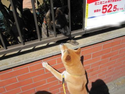 snap_sakichimaru_201051145734.jpg
