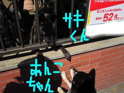snap_sakichimaru_20105115519.jpg