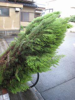 倒れた木①