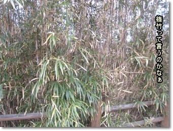 材料になる竹。