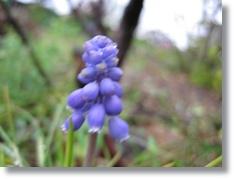庭花ー16