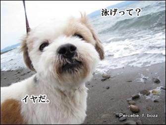 ちょっと海に触ってみる?
