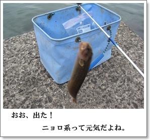 釣れちゃった。