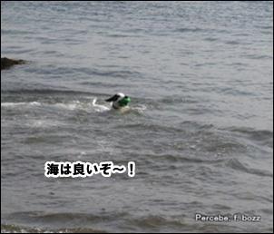 海は良いぞ~!