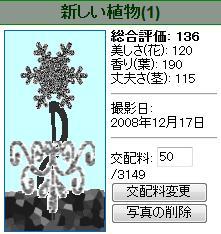 TWINKLE PLANT様081217