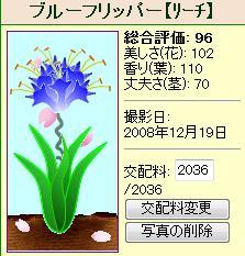 ブルーフリッパー081219