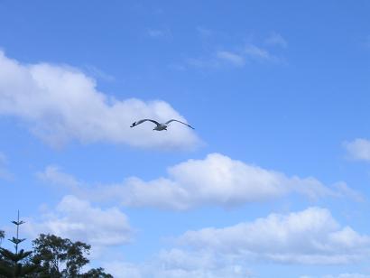 蓝天,水鸟。这张抓拍比较成功