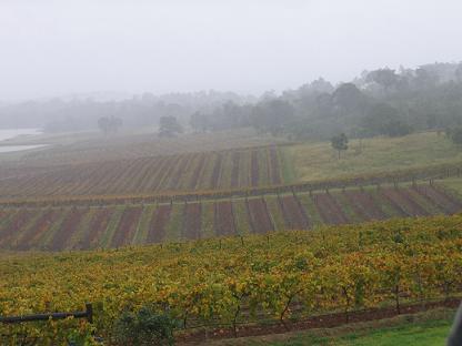 突然下雨了,雨雾迷朦下的葡萄园