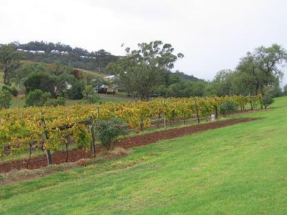 斜在山坡上的葡萄园