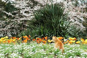 猫と桜とその他の花