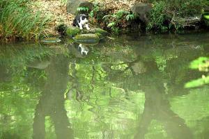 池の水を飲んでから顔を上げた猫(小さい)