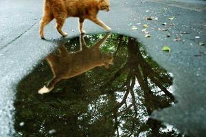 水たまり猫2