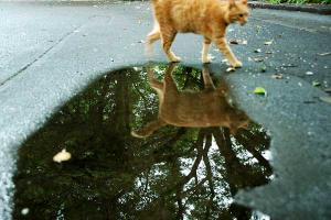 水たまり猫3
