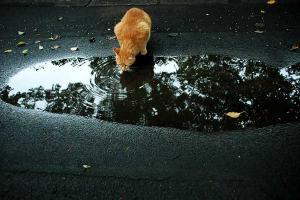 水たまり猫4