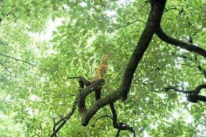 木登り猫2