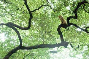 木登り猫6