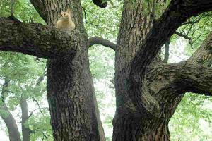 木登り猫7