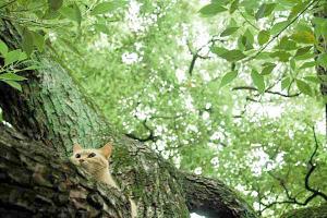 木登り猫8