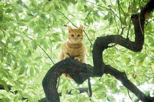 木登り猫10