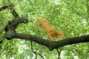 木登り猫11
