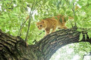 木登り猫12