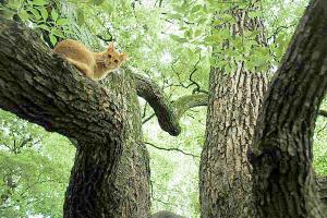 木登り猫13