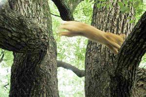 木登り猫14
