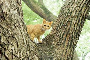 木登り猫15