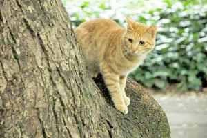 アジサイ猫16-2